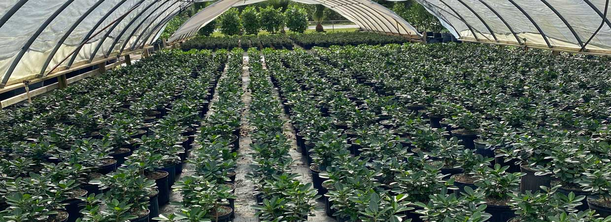 Full Service Wholesale Tree and Plant Nursery